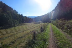 Lennesteig #09: Saalhausen - Schmallenberg - Im Milchenbachtal