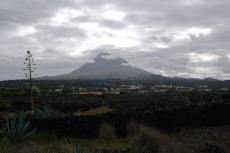 Weinparzellen am Hang des Pico