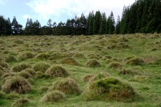 Im Hochland von Terceira