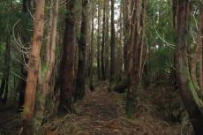 Zur Abwechslung ein bisschen Wald