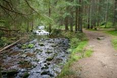 Bayerischer Wald   Kleiner Arbersee - Triftsteig
