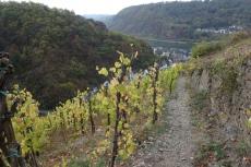 30. Int. Rhein-Mosel-Marathon - Durch die Weinberge nach Alken