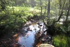 Hohes Venn – Rund um Ternell - Braunes Moorwasser