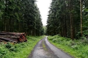 Eifelsteig #10: Von Gerolstein nach Neroth
