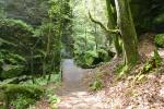 Malerweg #1 - Im Uttewalder Grund