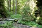Malerweg #3 - Abstieg nach Kohlmühle