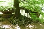 Malerweg #4 - Beeindruckende Wurzeln vor kleinem Felsentor