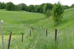 Malerweg #8 - Wiesenweg nach Naundorf