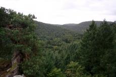 Felsenland Sagenweg - Viel, viel Wald...