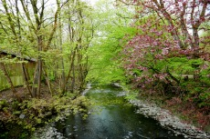 Bergische Wanderungen: Wald-Wasser-Wolle-Weg