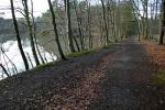 Hohe-Mark-Steig – Neue Wildnis