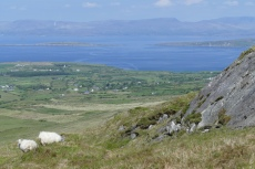 Irland – Beara Way – Von Castletownbere nach Allihies