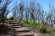 La Gomera: Spuren des verheerenden Feuers 2012