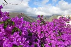 La Gomera: Blütenpracht