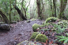 La Gomera: Im Lorbeerwald