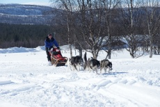 Lapplands Drag – Husky Expedition: Ab ins Gebirge!