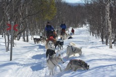 Lapplands Drag – Husky Expedition: Erste Pause