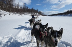 Lapplands Drag – Husky Expedition: Pause auf dem Fluss Vindelälven