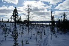 Lapplands Drag – Husky Expedition: Im Vindelfjällen