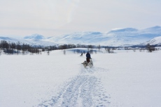 Lapplands Drag – Husky Expedition