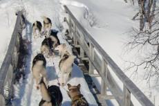 Lapplands Drag – Husky Expedition: Enge Brückenpassage