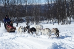 Lapplands Drag – Husky Expedition: Los geht's!