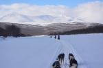 Lapplands Drag – Husky Expedition: Im Vindelfjällen