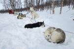 Lapplands Drag – Husky Expedition: Volvo hat noch Kraft zum Sitzen