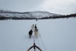 Lapplands Drag – Husky Expedition: Rückfahrt auf dem Vindelälven