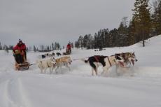 Lapplands Drag: Rasant um die Kurve