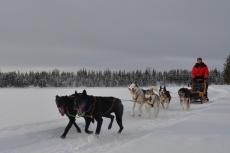 Lapplands Drag: Heinecken und Holtan geben das Tempo vor