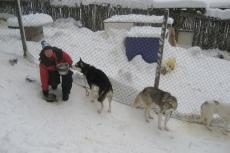 Lapplands Drag: Raubtierfütterung - vollkommen harmlos