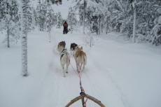 Lapplands Drag: Huskies in Traumlandschaft