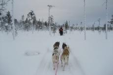 Lapplands Drag: Unberührte Natur