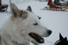 Lapplands Drag: Yakoot hat Feierabend