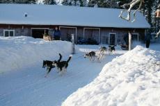 Lapplands Drag: Los geht die wilde Hatz