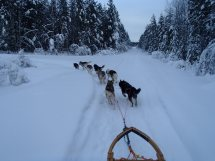 Lapplands Drag: Beeindruckender Blick auf Monis langes Gespann