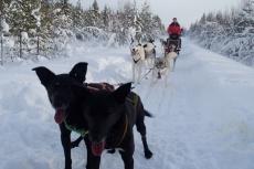 Lapplands Drag: Lass das Knipsen, wir wollen weiter...