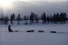 Lapplands Drag: Ein (scheinbar) einsamer Musher