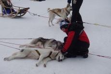 Lapplands Drag: Erschöpft, aber glücklich