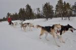 Lapplands Drag: Monis Achter-Gespann