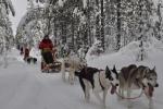 Lapplands Drag: Gespanne im Winterwald