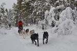 Lapplands Drag: Das macht einfach nur Spaß