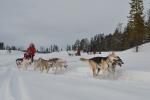 Lapplands Drag: Unsere Gruppe in voller Fahrt