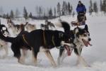 Lapplands Drag: Zunge raus und Vollgas