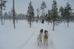 Lapplands Drag: Aus der Sicht des Mushers