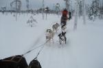 Lapplands Drag: Kurze Zwangspause