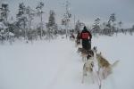 Lapplands Drag: Immer diese Staus...