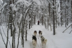 Lapplands Drag: Im Zauberwald