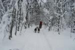 Lapplands Drag: Blick zurück